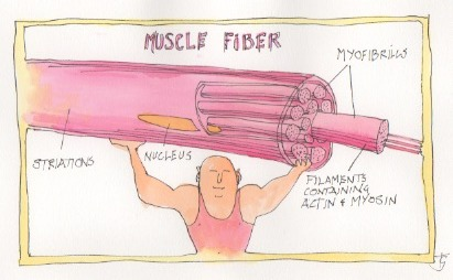 EXERCISE AND MUSCLES